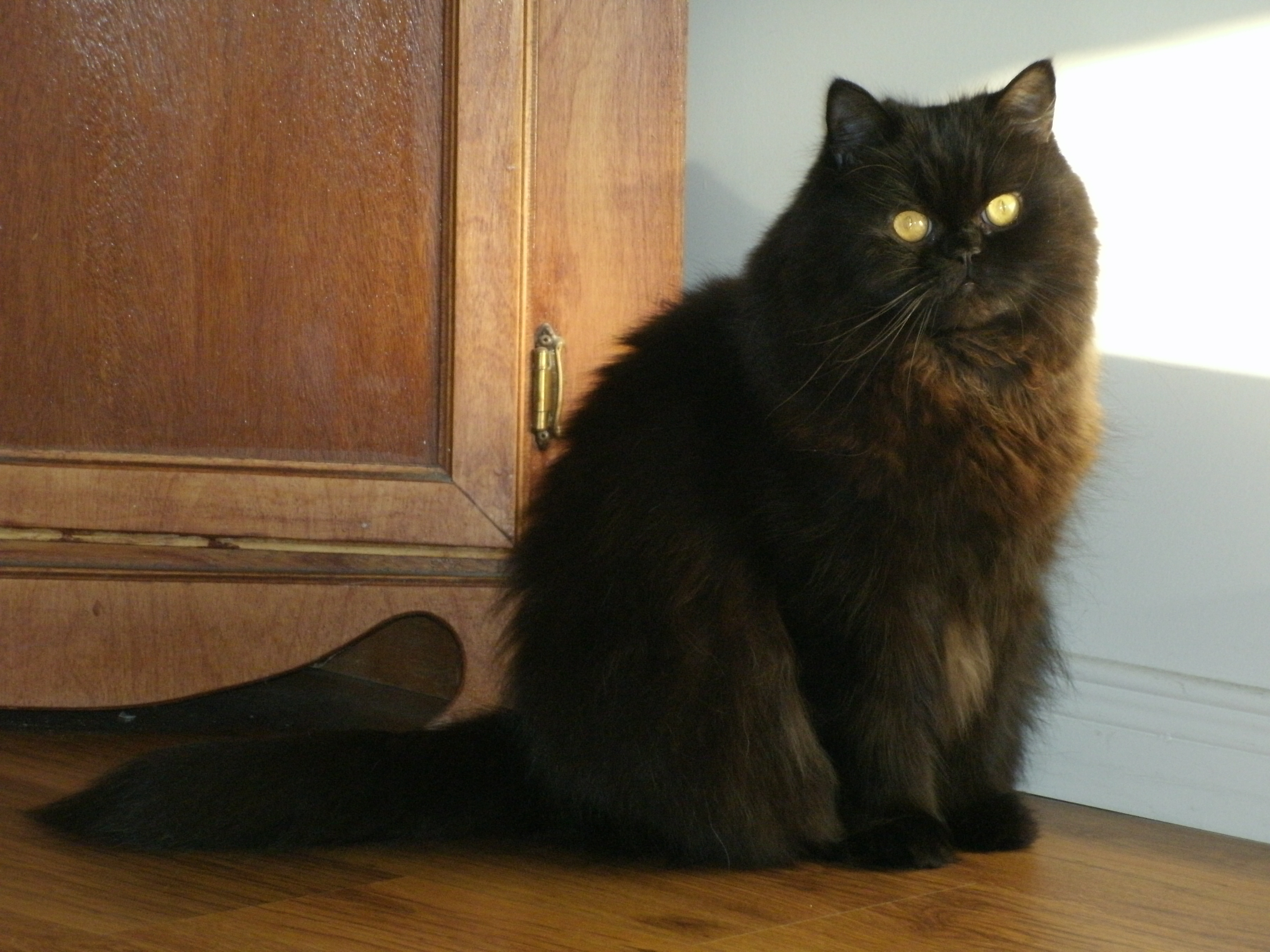 What Is The Name For A Black Cat